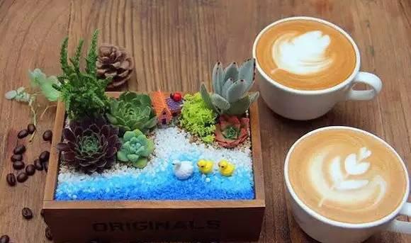 有家咖啡店一直亏损 引入DIY多肉盆栽满血复活