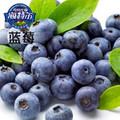 烘焙原料优质蓝莓