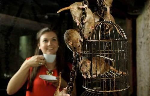 伦敦地下咖啡馆:服务生是可爱的老鼠