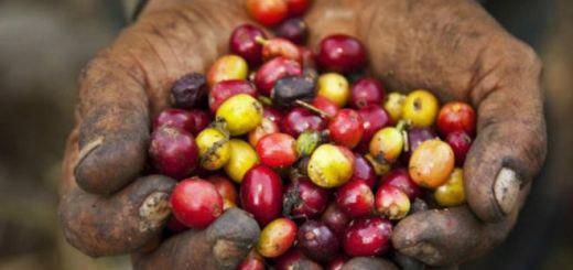 越南咖啡产业近10年数据 2030年产值将翻番