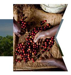 咖啡生豆 卢旺达 COE