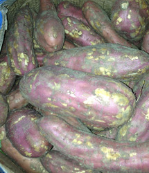 红薯原材料