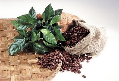 什么牌子的咖啡豆比较好