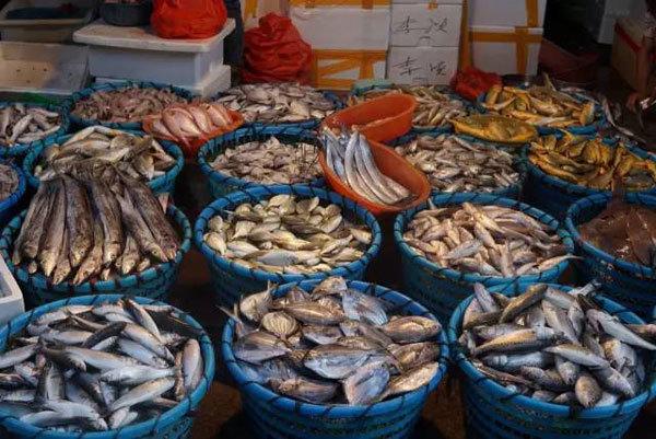 海鲜食材之扒皮鱼--马面鲀