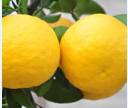 天然柚果系列产品