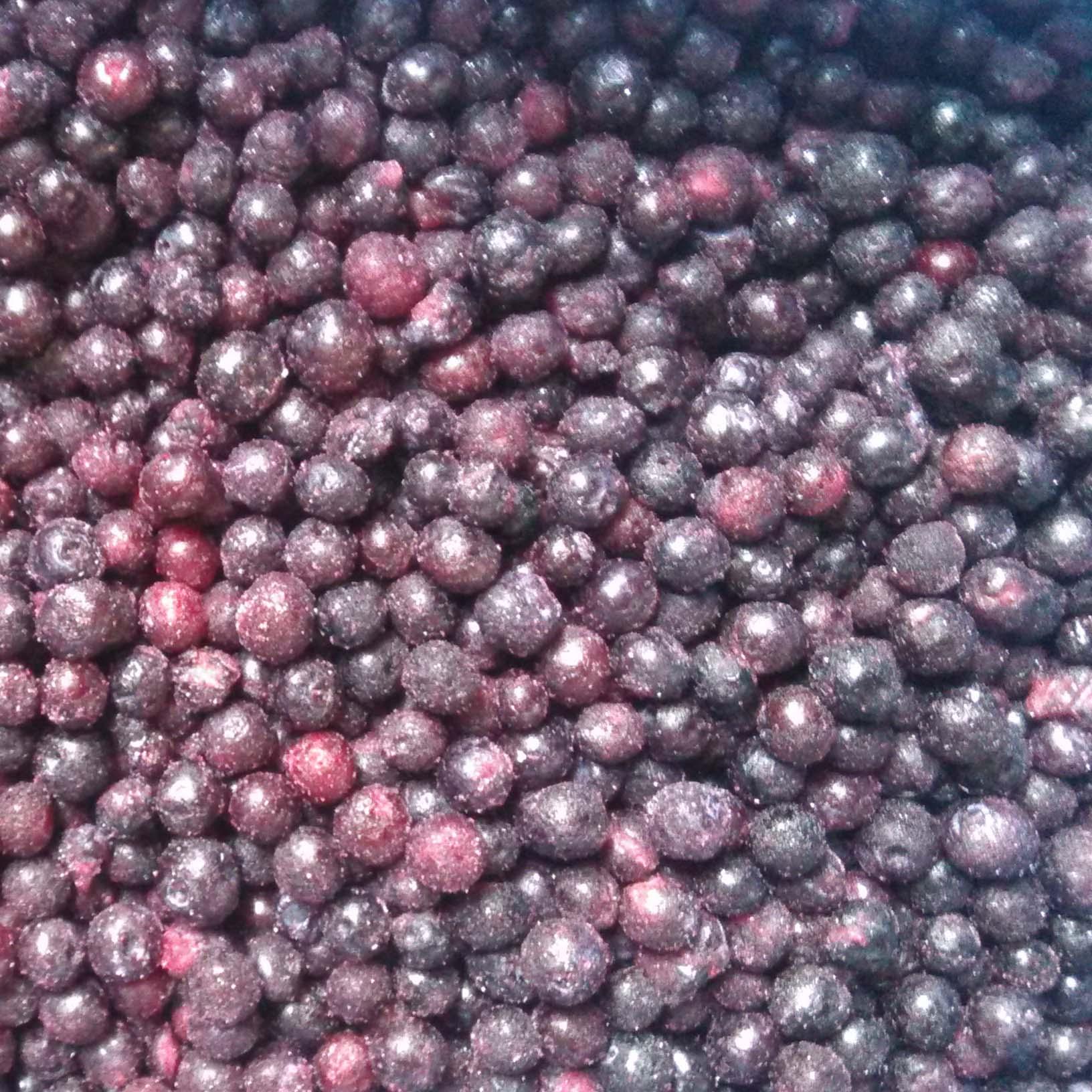 加拿大野生蓝莓