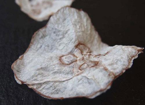 食材︱水母成灾怎么办?丹麦科学家研制出低热量水母脆片