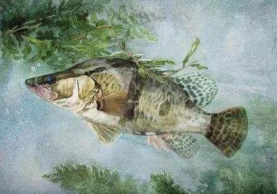 烹饪食材之宜香宜臭的鳜鱼 鳜鱼怎么做好吃