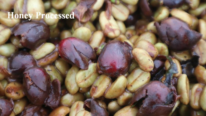 亞力山大莊園 蜜處理生豆